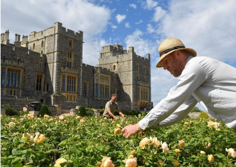 windsor castle opens terrace garden for first time in 40 years