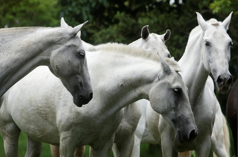 costa rica researchers to trial coronavirus treatment from horse antibodies