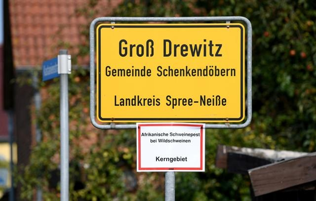 germany finds two more african swine fever cases one in new area