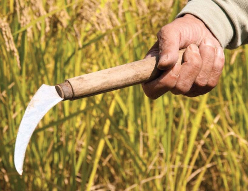 33 farm households suffer loss in earnings