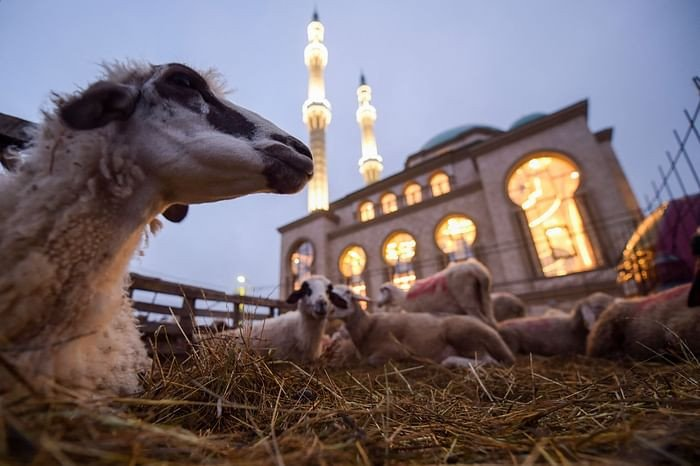 Sheep lie down in the straw in front of a mosque near Pristina, Kosovo, on July 20, 2021, during the sacrificial Eidul Azha. PHOTO: AFP
