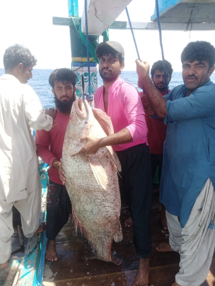 the fish is a rare croaker kir and weighs approximately 48kg it was sold in the jiwani fish market on sunday at a cost of rs150 000 per kg photo express
