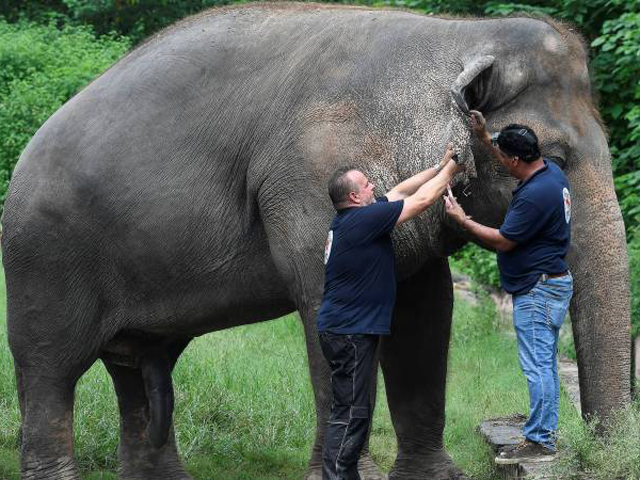 Freedom and uncertainty: A lonely elephant's journey into a whole new world