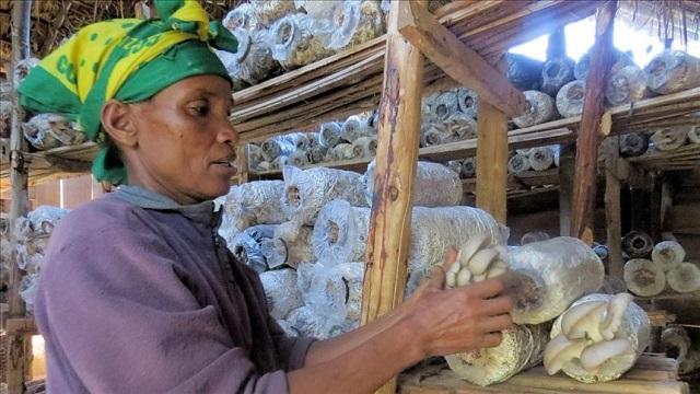 mushroom helps tanzania farmers fight climate change