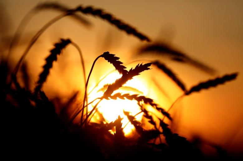 pakistan allows release of another 65 000 tons of wheat