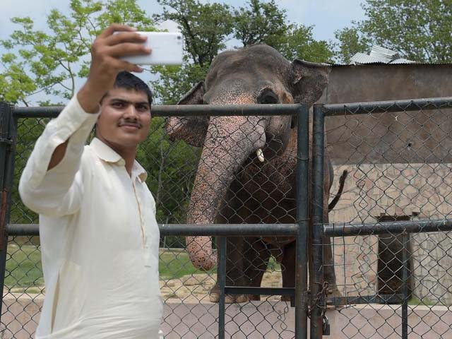 a visitor taking a selfie next to the elephant kaavan at the marghazar zoo photo afp